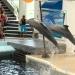 Várna & Delfinárium látogatás